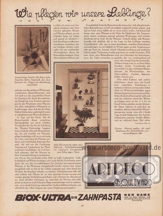 """Artikel: Saathoff, Johann, Wie pflegen wir unsere Lieblinge? (von Johann Saathoff).  Der Artikel wird mit drei Fotografien illustriert, die verschiedene Pflanzen und Gewächse zeigen. Die Bildunterschriften lauten """"Riesenblütige Stapelie. Die Blüten aller Stapelien haben Aasgeruch, der dazu bestimmt ist, Fliegen zur Befruchtung anzulocken"""", """"Helle Blumennische neben einer Balkontür. Schleiflackbrettchen mit eingelegten Eternitplatten zum Schutz gegen Nässe"""" sowie """"Unten: Mimosa pudica, die nach Berührung ihre Fiederblättchen zusammenklappen läßt"""".  Werbung: """"Biox-Ultra die Zahnpasta der Dame macht die Zähne blendend weiß und beseitigt Mundgeruch und Zahnbelag"""", Biox-Ultra."""