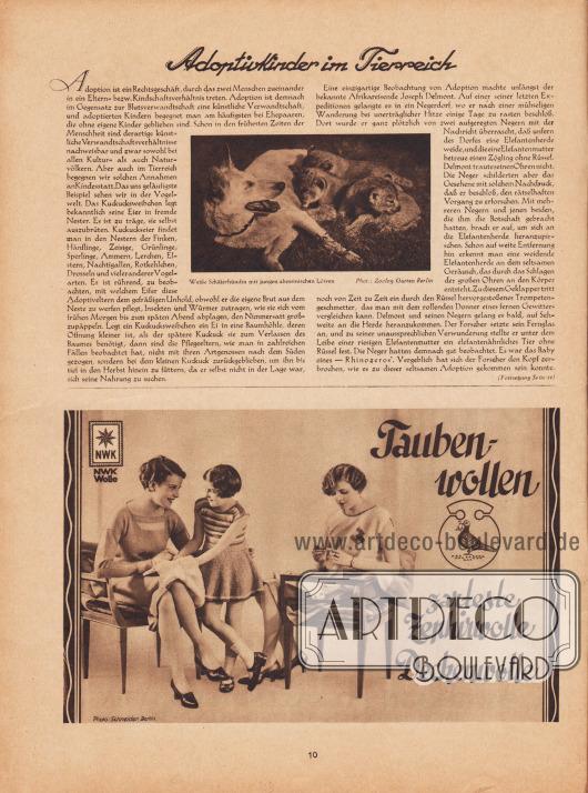 """Artikel: O. V., Adoptivkinder im Tierreich.  Die zum Artikel passende Fotografie besitzt die Bildunterschrift """"Weiße Schäferhündin mit jungen abessinischen Löwen"""". Foto: Zoologischer Garten, Berlin.  Werbung: """"Taubenwollen, zarteste Zephirwolle, Deckenwollen"""", Norddeutsche Wollkämmerei & Kammgarnspinnerei (Nordwolle oder kurz NWK Wolle), Foto: Atelier Ernst Schneider, Berlin (1881-1959)."""